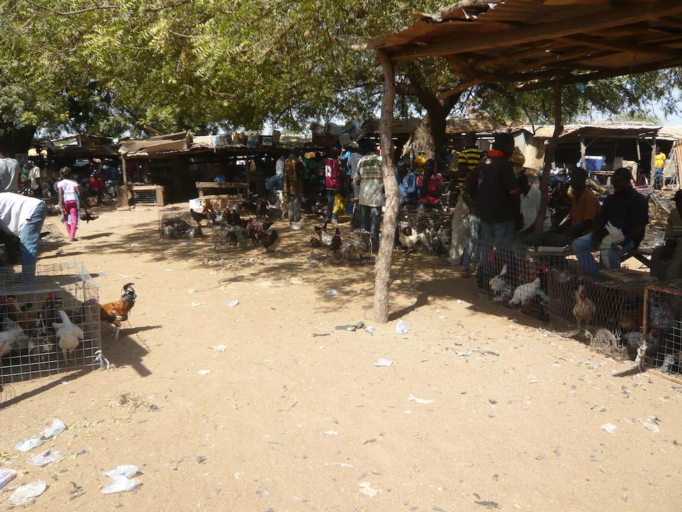 Geflügelmarkt in Bolgatanga